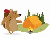 Bär beim Camping