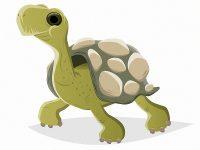 Lustige Schildkröte