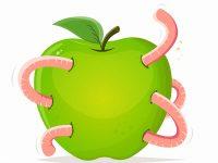 Wurm im Apfel